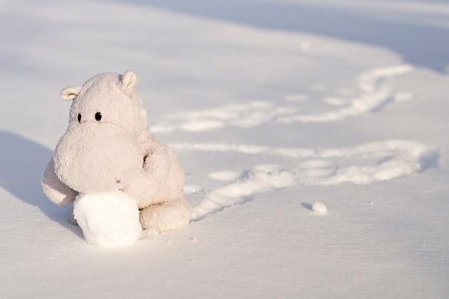 Tiny Hippo Makes Snowman