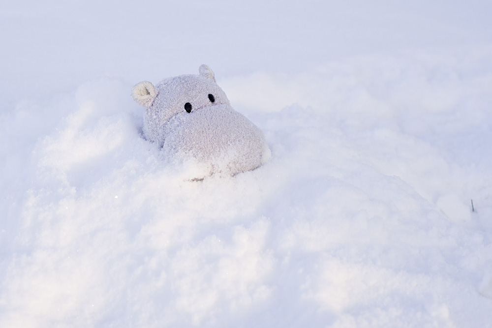 Tiny Hippo Surfaces in the Snow