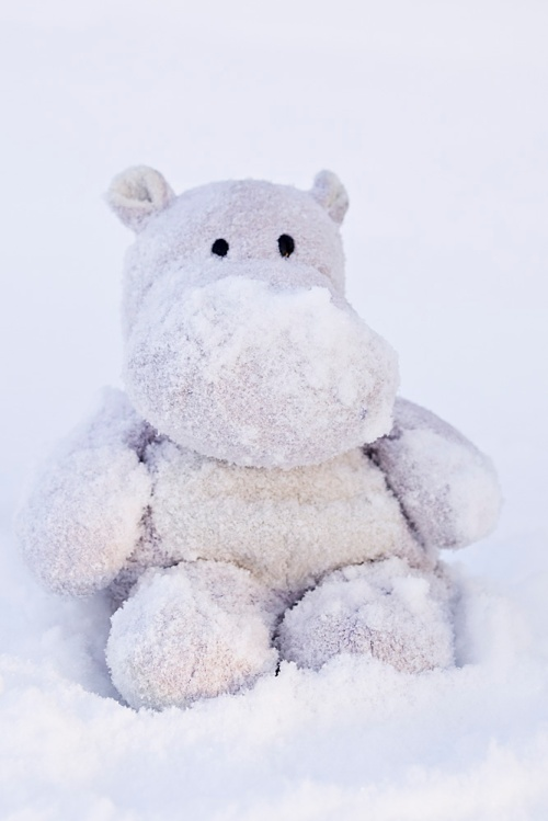 Tiny Snow Hippo
