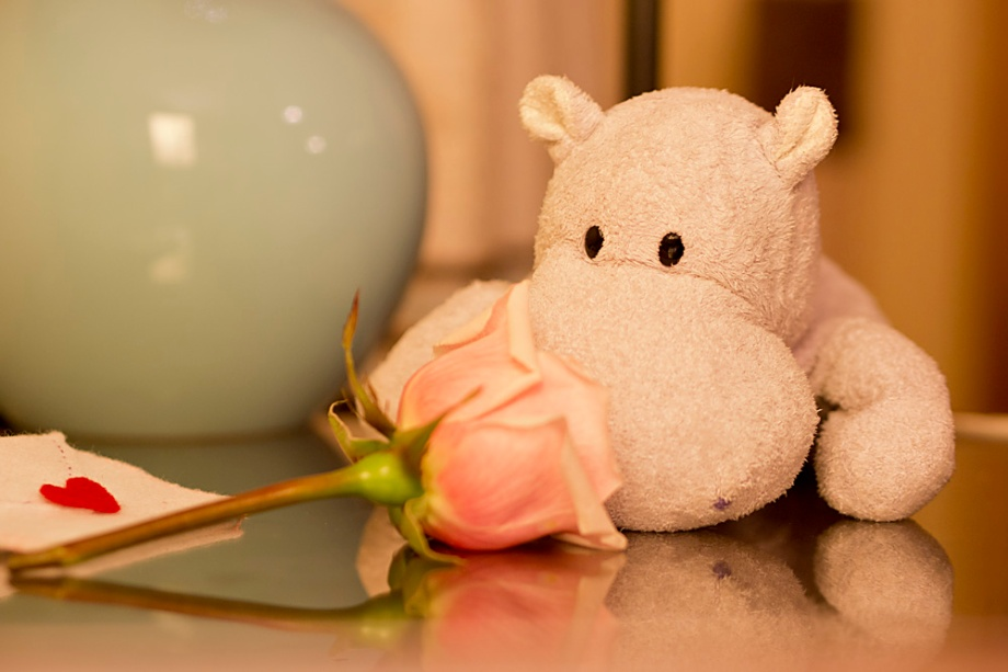 Tiny Hippo and a Rose