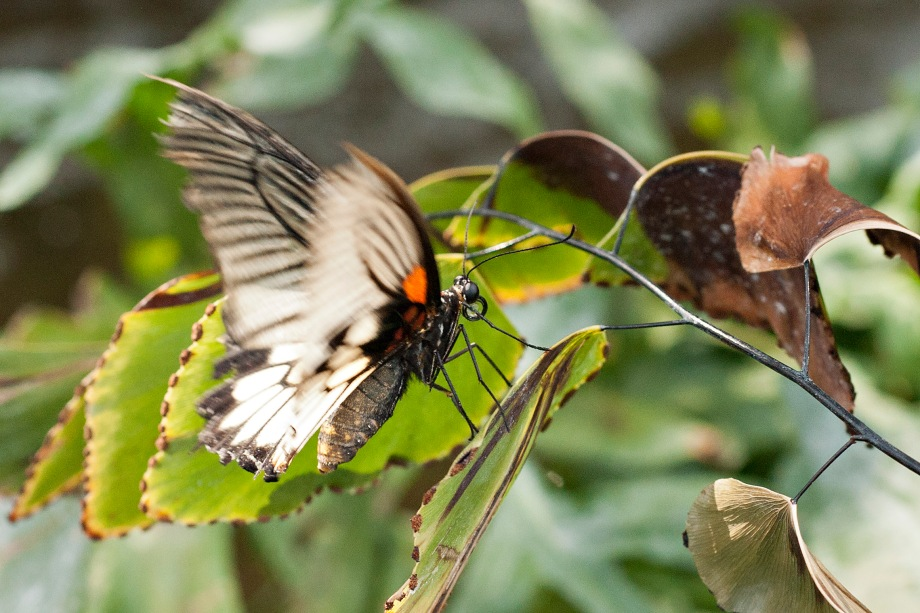 I kept startling the butterflies as approached to make friends, they seem to be very timid