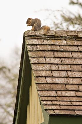 Squirrel on his perch