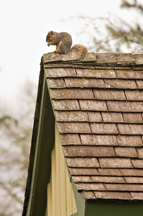 Squirrel on his perch