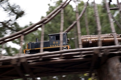 The logging train works high above visitors heads