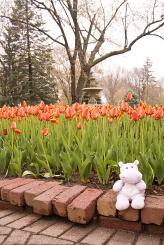 Tiny Hippo and the Tulips