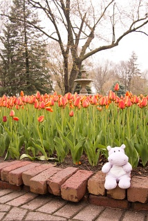 Tiny Hippo and the Tulips