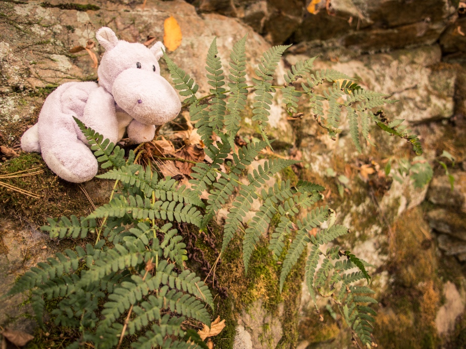 Tiny Hippo with Ferns
