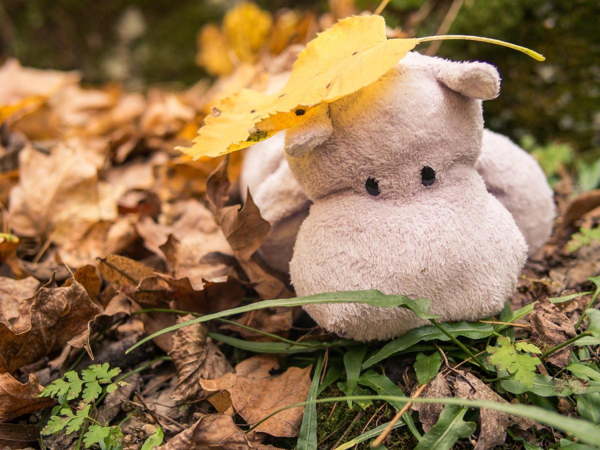 Tiny Hippo Hunts a Fern