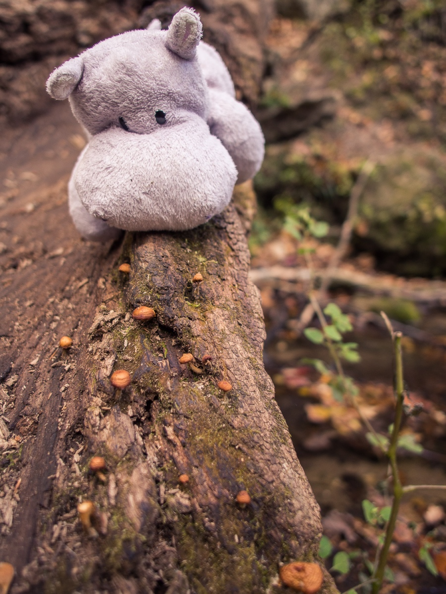 Tiny Brown Mushrooms on a Log