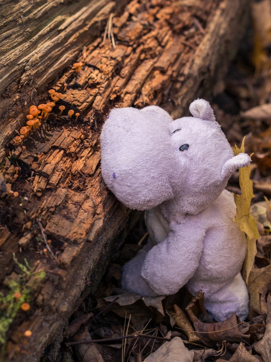 Tiny Brown Mushrooms and Tiny Hippo