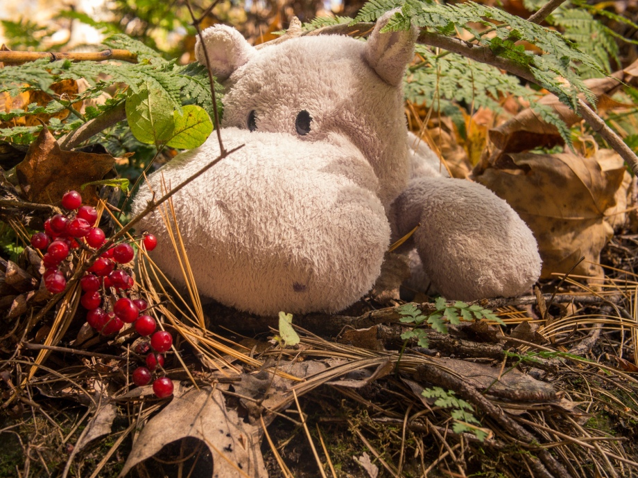 Red Berries and Tiny Hippo