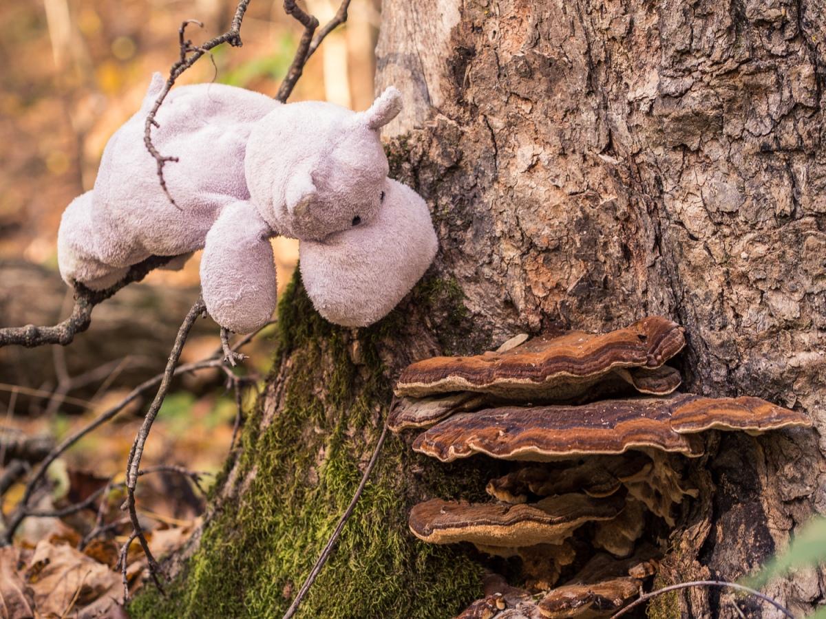 Tiny Hippo and Shelf Mushrooms