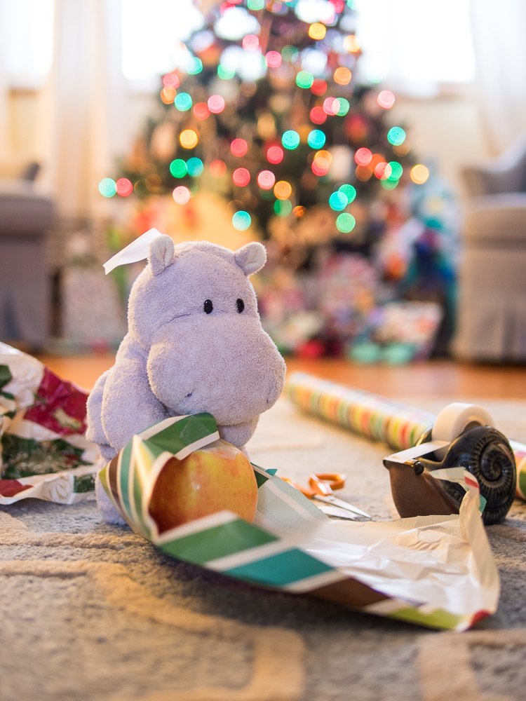Tiny Hippo Tries to Use Wrapping Paper