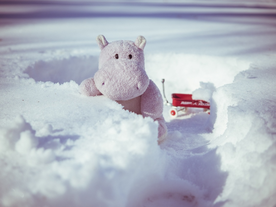 Snow Hippo Getting Ready to Build an Igloo