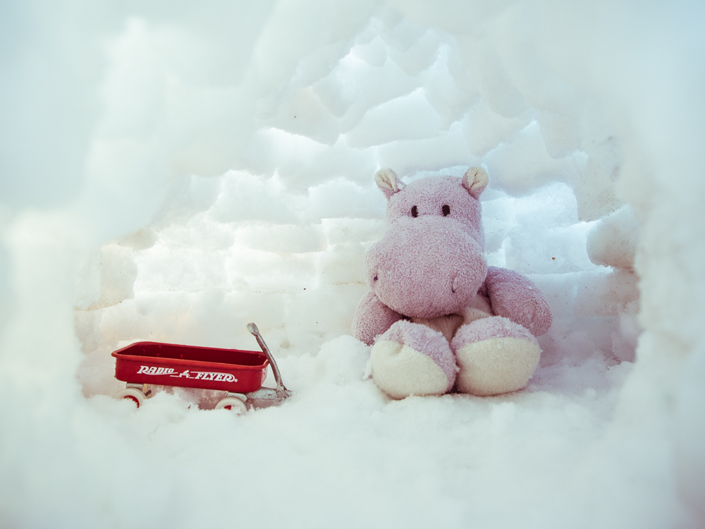 Snow Hippo in his Igloo