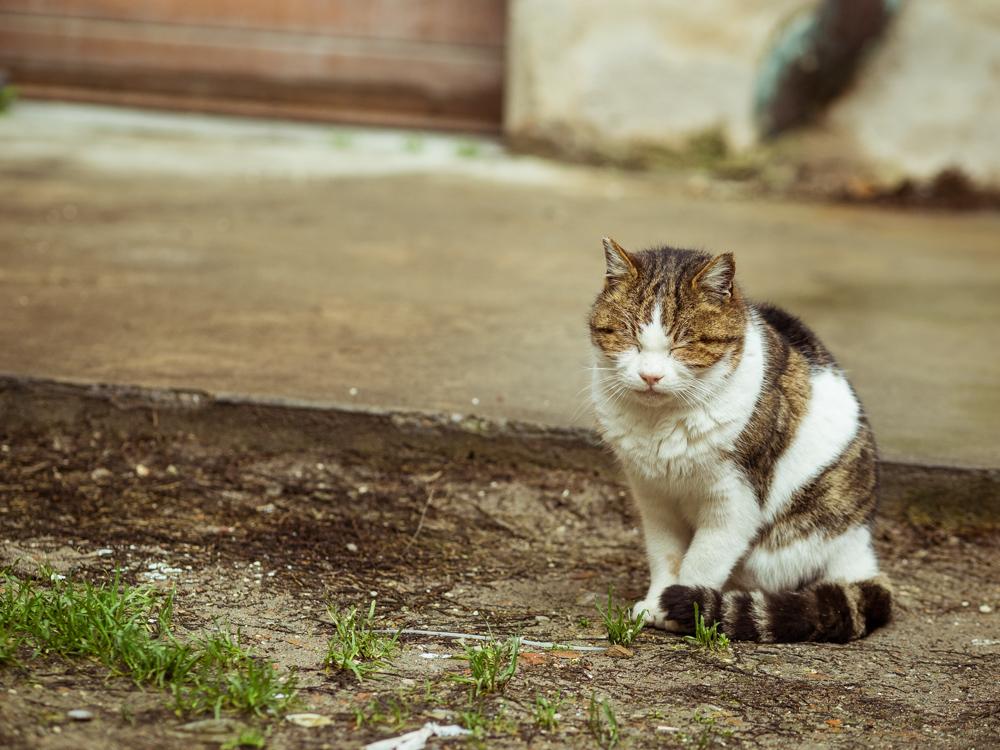 Morning Cat in Ferrara, Italy