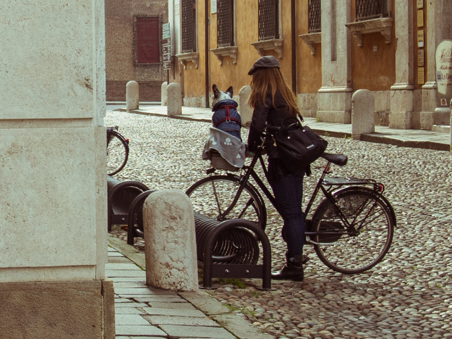 Dog in Bike Basket, Ferrara