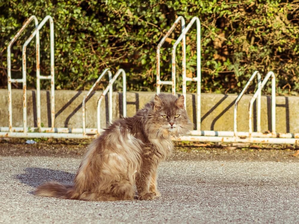 Cat Looking Fabulous