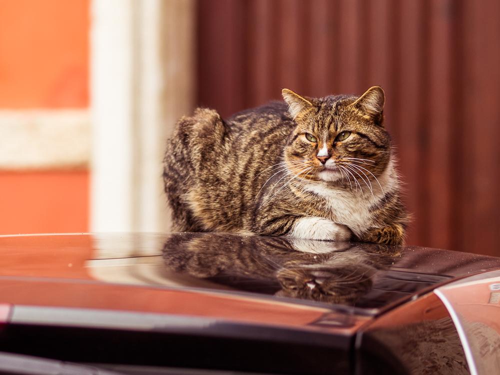 Kitty Cat in Italy
