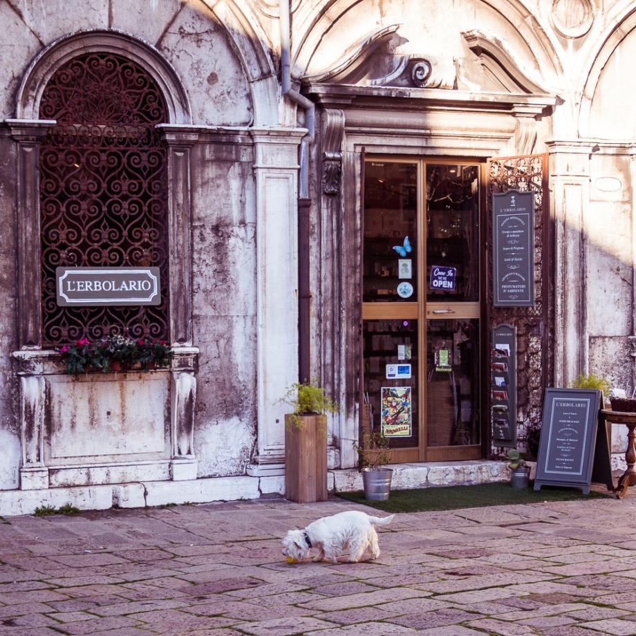 Tiny White Dog in Venice, Italy