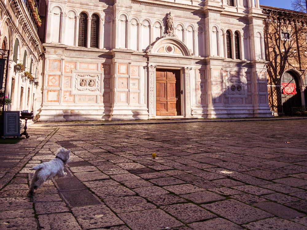 White Dog in Front of San Zaccaria