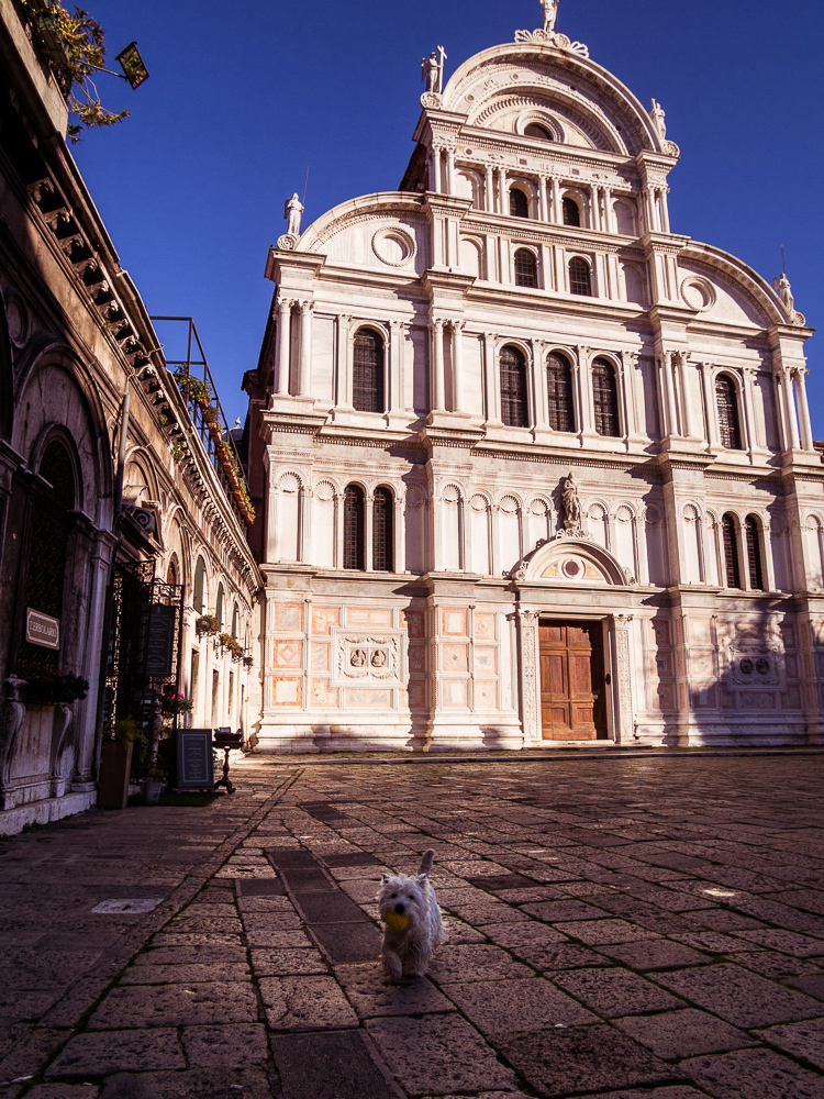 White Dog Playing Fetch at San Zaccaria
