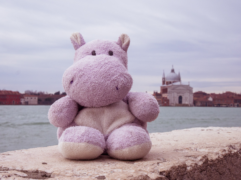Tiny Hippo and Church of San Giorgio Maggiore