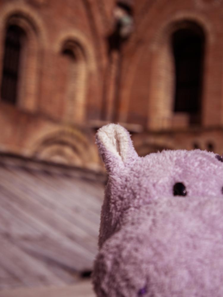 Tiny Hippo Takes a Selfie