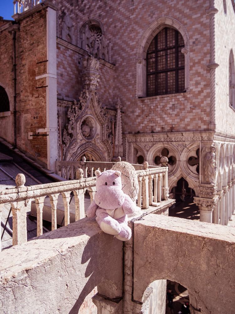 Tiny Hippo in Venice
