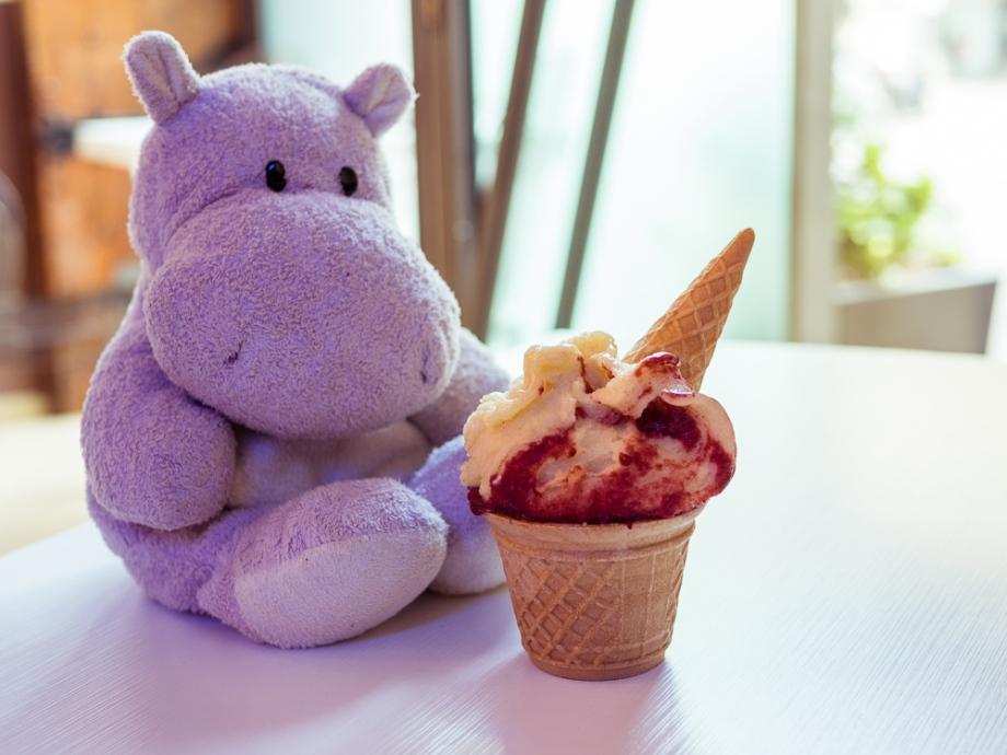 Tiny Hippo with Gelato