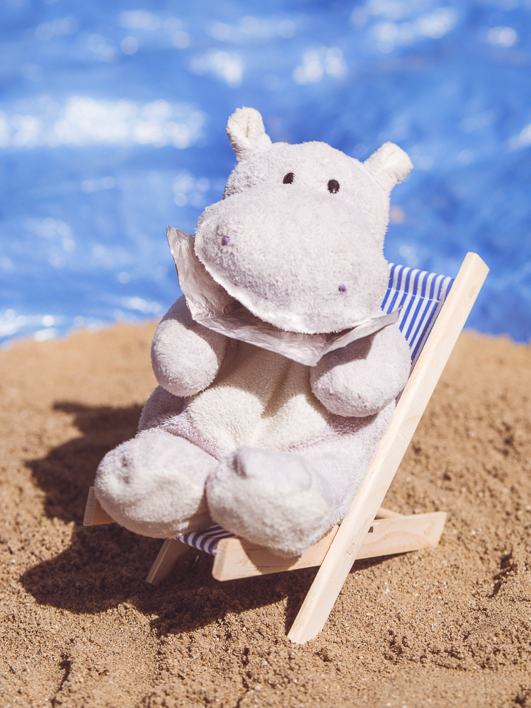 Tiny Hippo Sunbathing