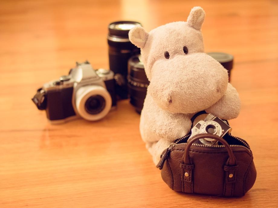 Tiny Hippo with Hit Camera