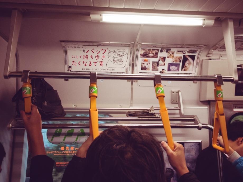 Cat Subway Train, Tokyo