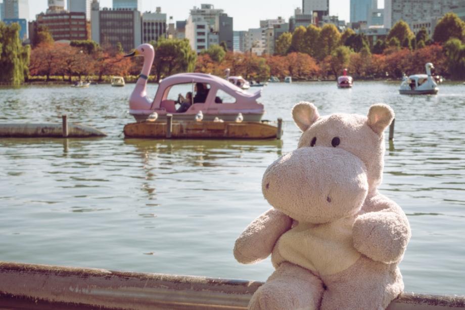 Swan Boat Shinobazu Pond in Ueno