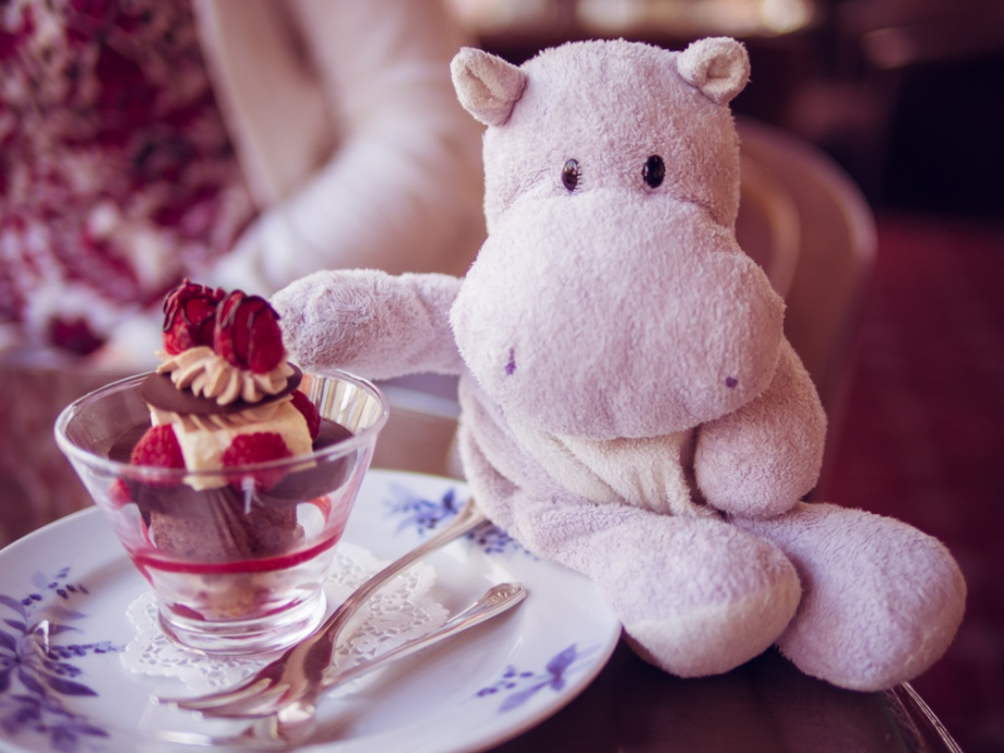 Tiny Hippo Dines at Nara Hotel