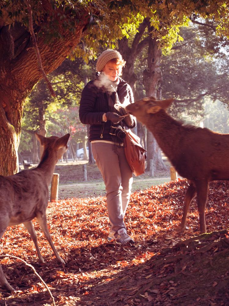 Nara Deer Crackers