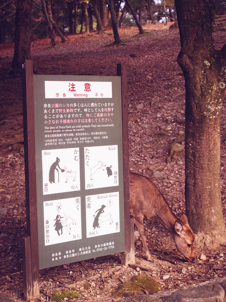 Nara Deer Warnings