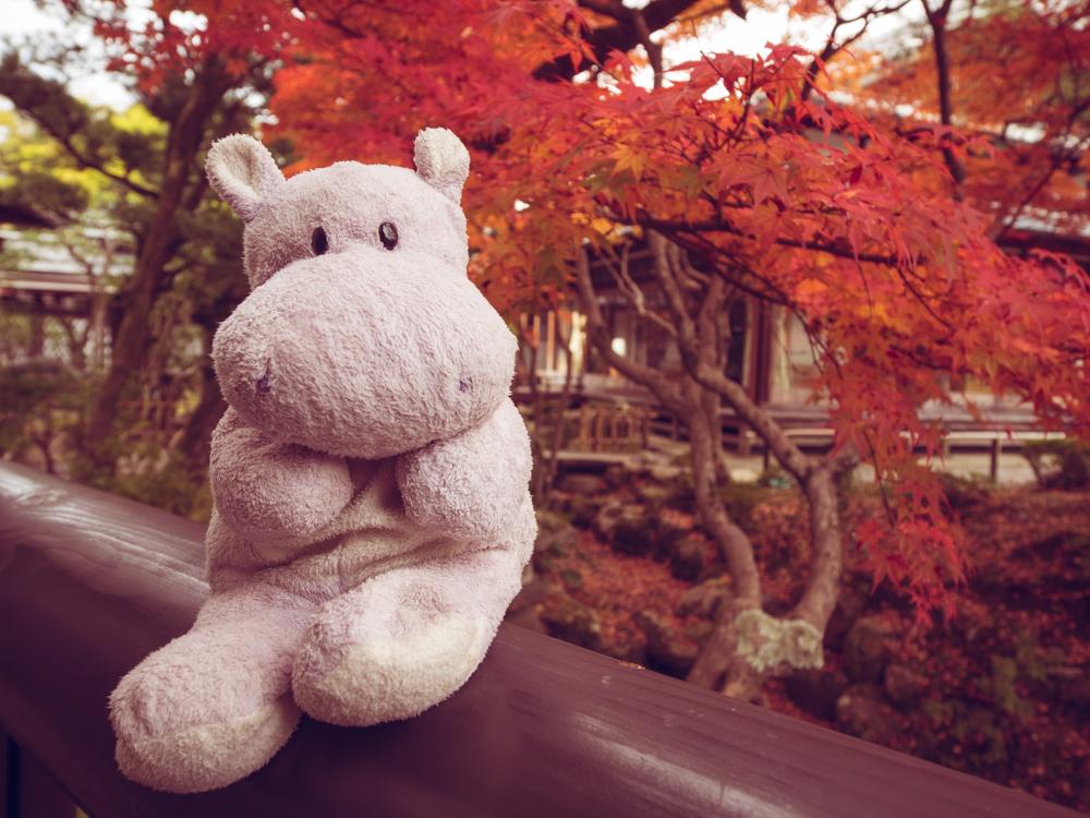 Tiny Hippo at Yoshikien Garden