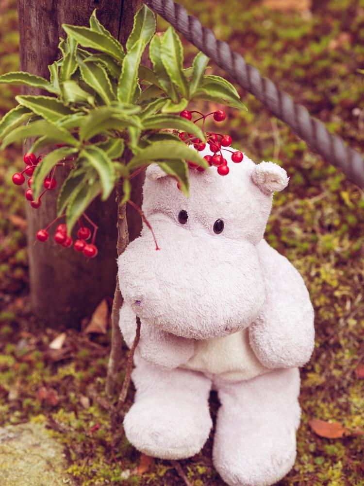 Tiny Hippo in a Garden