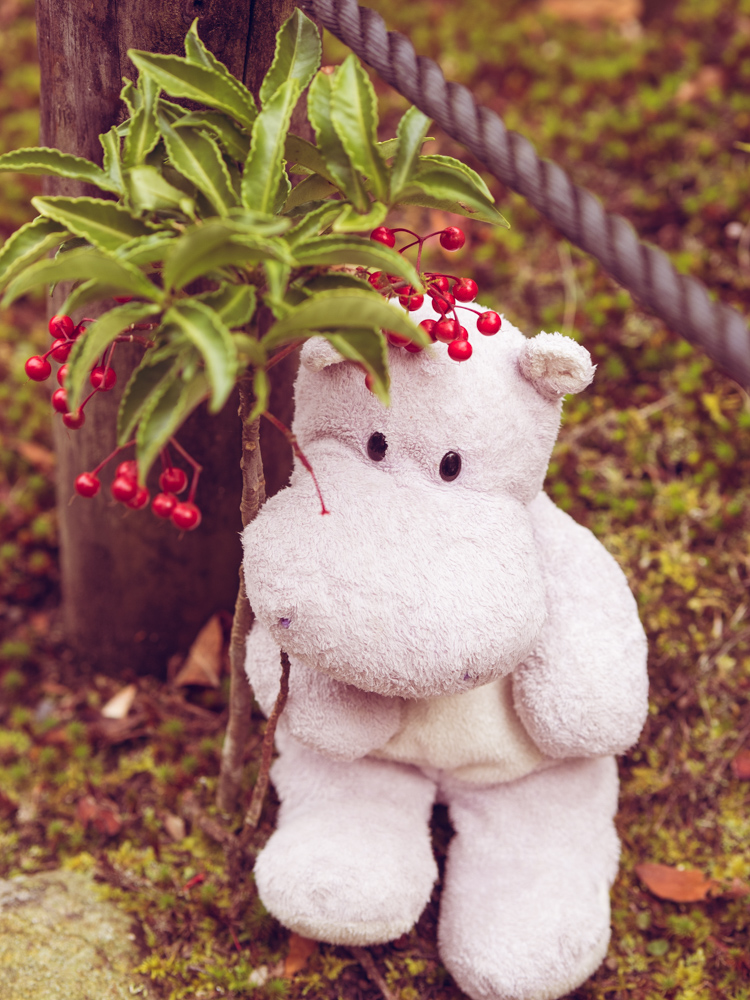 Tiny Hippo in a Garden