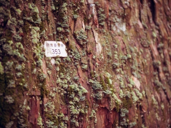 Cedar Tree Number