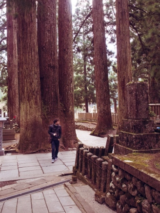 Cedars of Koyasan