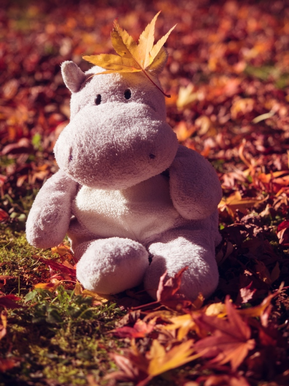 Tiny Hippo Playing in the Leaves