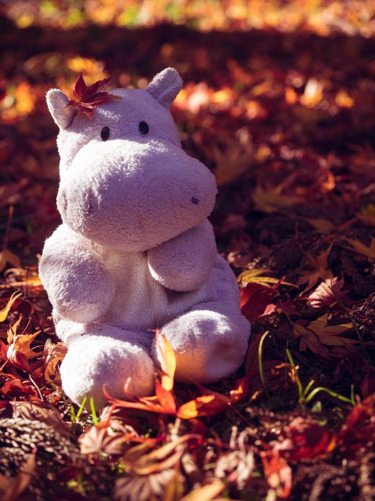 Tiny Hippo in the Fall