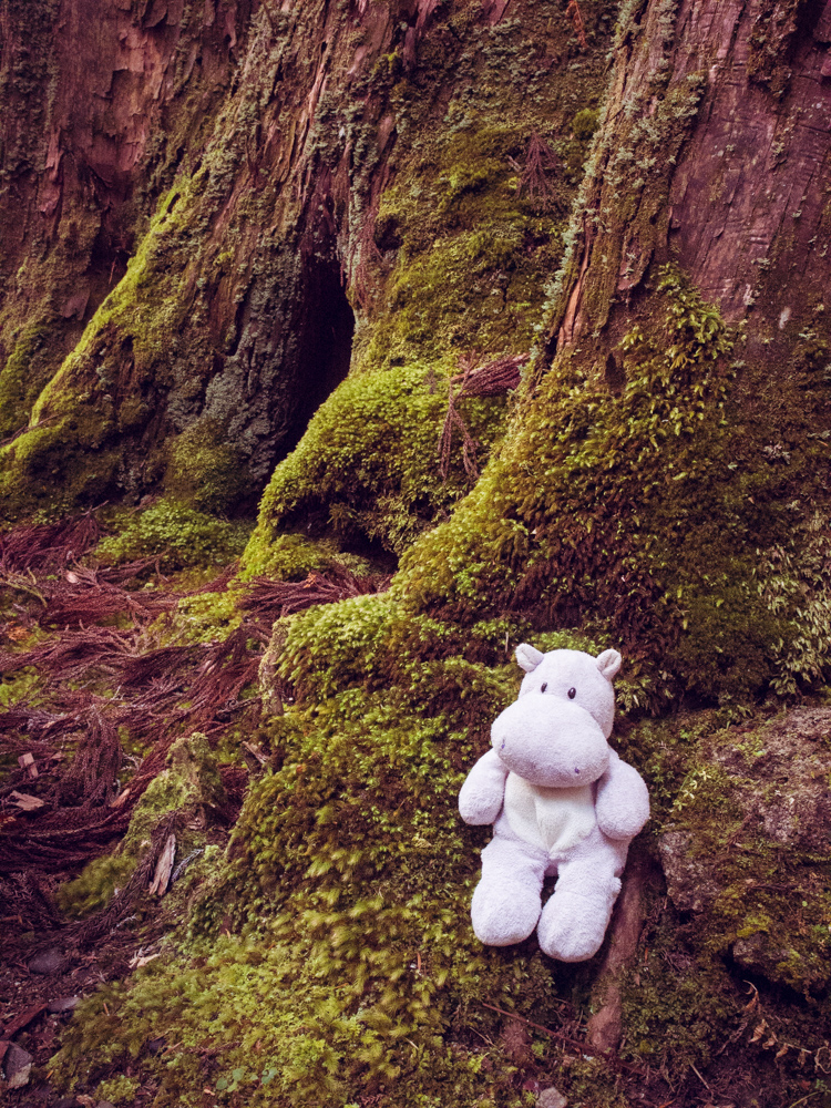 Tiny Hippo in the Moss