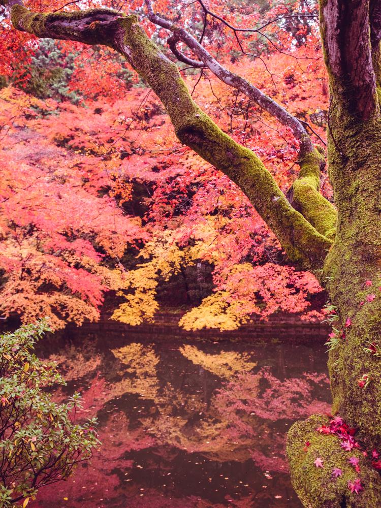 Pond at Kiyomizu-dera