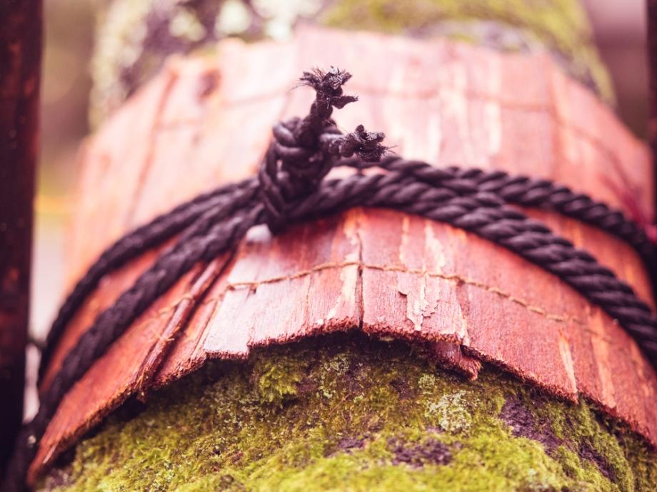 Tree Wrap, Japan