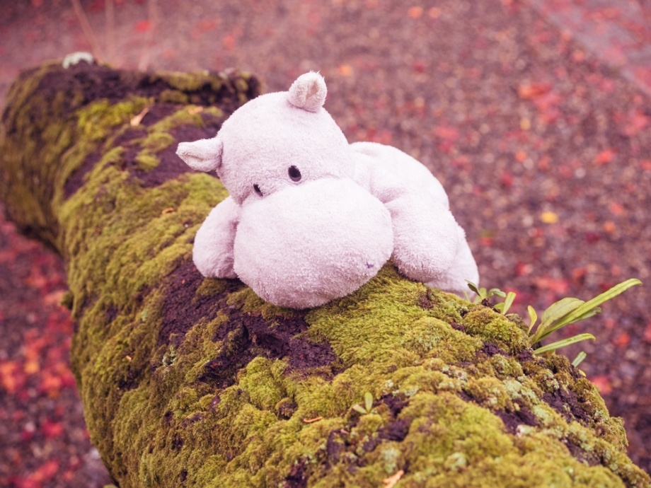 Tiny Hippo with Mossy Tree