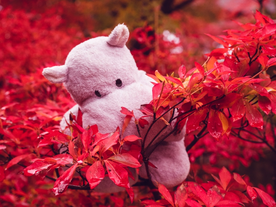 Tiny Hippo Examines the Fall Leaves