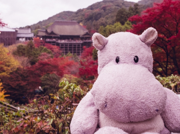 Tiny Hippo at Kiyomizu-dera